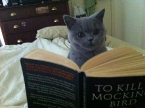 cat how to kill a mockingbird