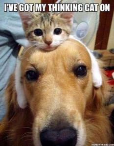thinking cat on dogs head
