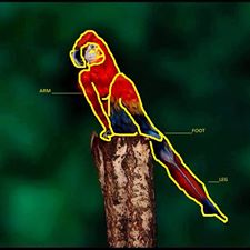 body paint parrott diagram