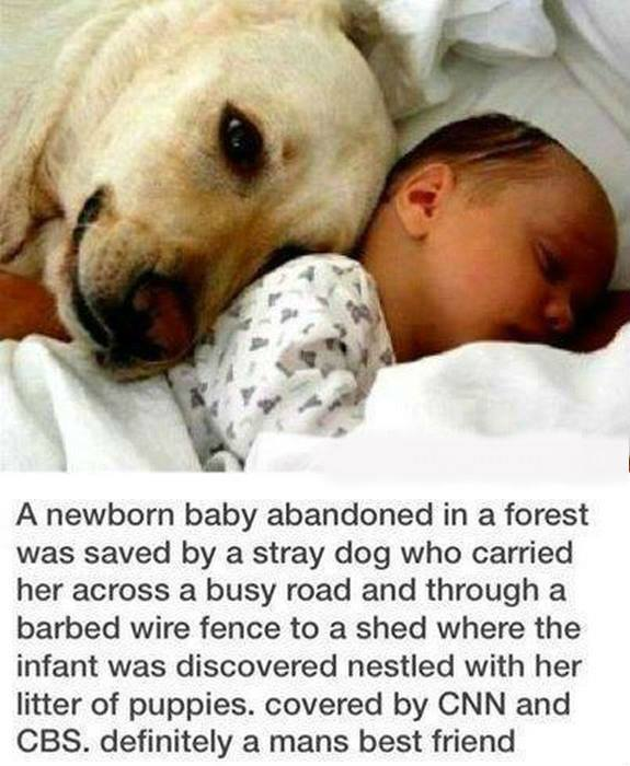 dog saves baby abandoned in forest