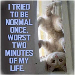 kitty funny pic I tried to be normal once